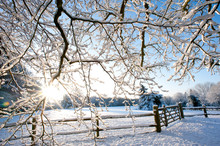 A Bright Winter Scene With Sun...