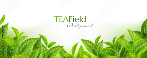 Obraz Green tea leaves background. Horizontal panoramic banner with fresh  tea branches on the soft backdrop. Vector illustration with realistic design elements. - fototapety do salonu