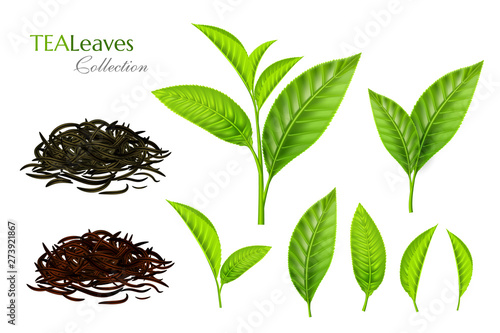 Fotomural Green tea leaves collection