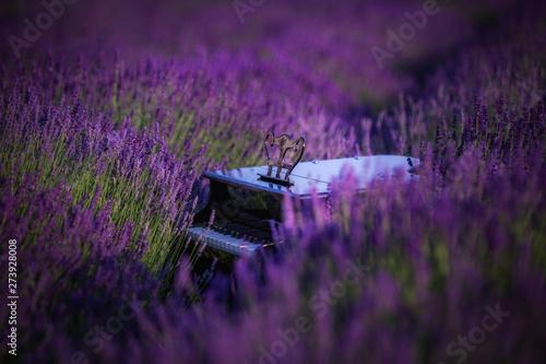 Montage in der Fensternische Aubergine lila piano in lavender