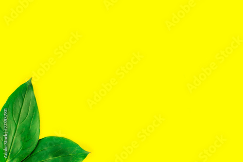 Frame of green leaves isolated on pastel yellow background. Minimal summer concept. Flat lay top view. Copy space.