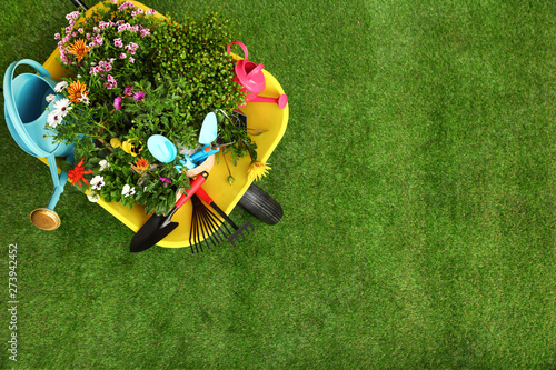 Fototapeta Wheelbarrow with flowers and gardening tools on grass, top view. Space for text obraz