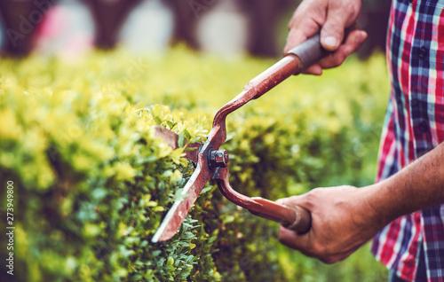 Cuadros en Lienzo Gardening