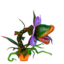 Carnivorous Plant With Copy Space In A White Background