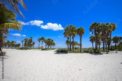palm tree on the beach with blue skies