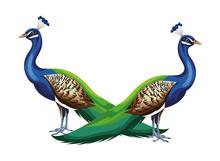 Peacock Bird Icon Cartoon Isolated