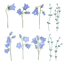 Set Of Campanula Isolated Elements. Color Hand Drawn Vector Illustration.