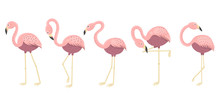 Funny Flamingos In Different P...