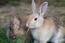 Zwei Junge Kaninchen Fressen Gemeinsam