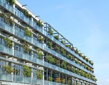 Immeuble Végétalisé Avec Rosiers En Façade