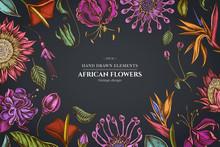 Floral Design On Dark Background With African Daisies, Fuchsia, Gloriosa, King Protea, Anthurium, Strelitzia