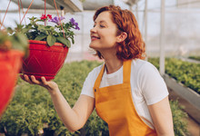 Smiling Gardener Smelling Flowers In Hothouse