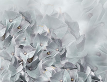 Hydrangea Flowers. Light Gray ...