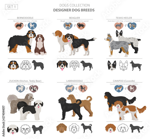 Fotografía  Designer dogs, crossbreed, hybrid mix pooches collection isolated on white