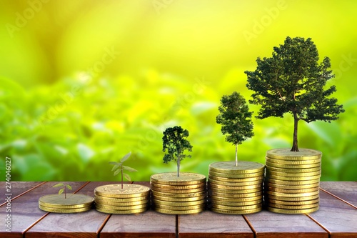 Fototapeta Gold coins pile stack and growing money and grow trees that grow up on nature background, Saving money and ecology concept. obraz