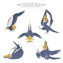 Cockatiel Yoga Poses And Exercises. Cute Cartoon Clipart Set