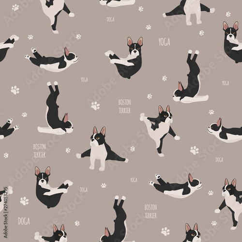 fototapeta na szkło Yoga dogs poses and exercises. French bulldog seamless pattern