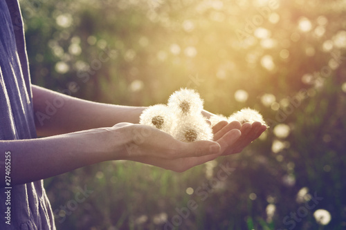 Foto auf Leinwand Lowenzahn young woman wearing linen dress standing in sunlight holding beautiful dandelion flowers