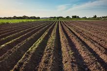 Ploughed Field, Springtime Agricultural Background