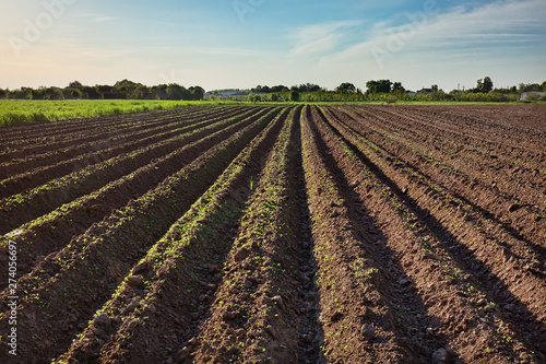 Photo Ploughed field, springtime agricultural background