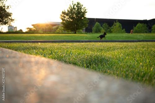 Foto auf Leinwand Landschaft Sunrise in the city park. Horizontal landscape with selective focus