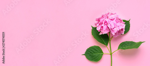 Cuadros en Lienzo Beautiful flowers of pink hydrangea with green leaves on pink background top view flat lay copy space