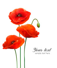 Red Poppy Flowers Isolated On White Background. Vector Illustration