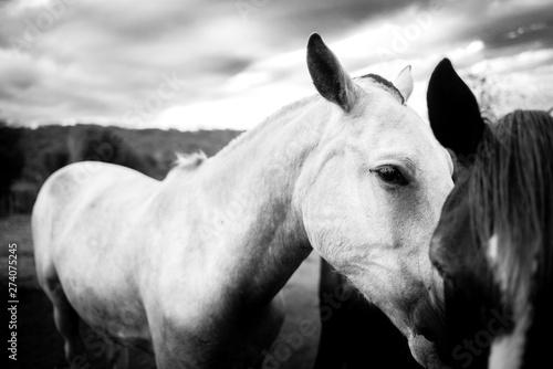 Tuinposter Paarden horses