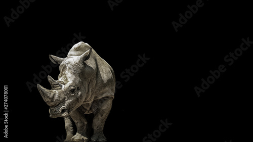 Fotografie, Obraz Portrait rhino on the black