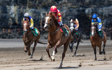 Close Up On Lead Race Horse An...