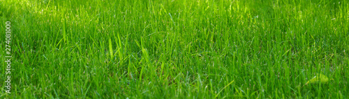 Photo sur Toile Herbe panoramic view of the green grass