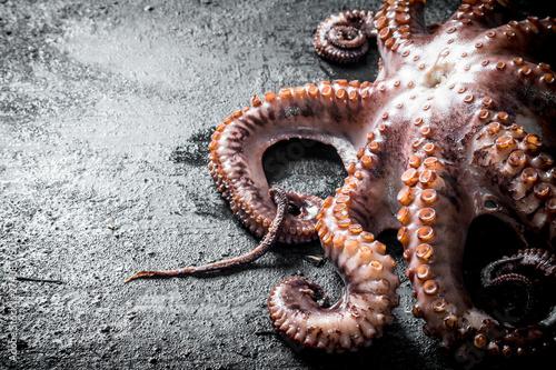 Fotografia Fresh octopus food.