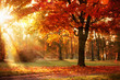 canvas print picture Autumn Landscape. Fall Scene.Trees and Leaves in Sunlight Rays