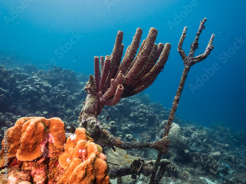 Foto auf AluDibond Riff Seascape of coral reef in the Caribbean Sea around Curacao with coral and sponge