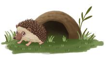 Hedgehog And Burrow