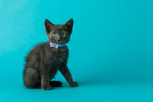 Grey Gray Cat Kitten With Gree...