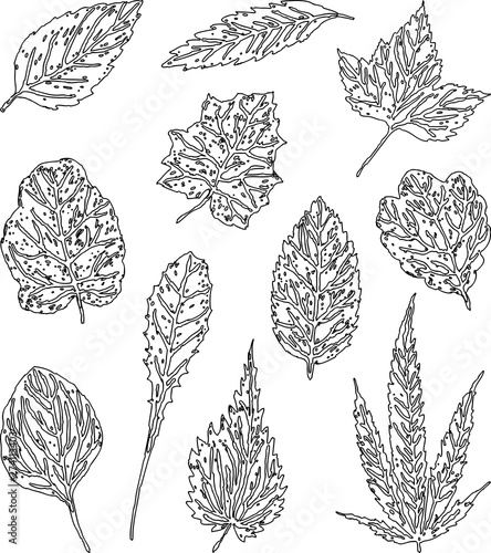 Vector drawing of a set of outlines leaves of various plants Wall mural