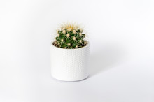Golden Barrel Cactus With Yellow Spikes In White Pot Isolated On White Background. Minimalistic Concept
