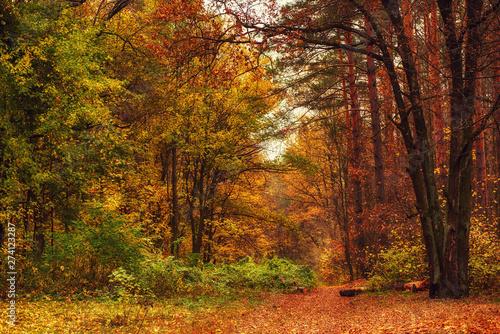 Aluminium Prints Autumn Autumn beautiful park