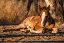 Salt River Horses, Arizona