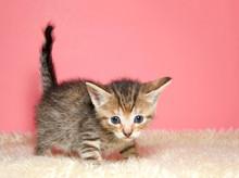 Adorable Tiny Kitten Few Weeks...