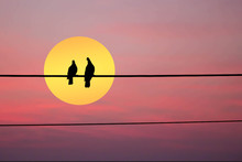 Silhouette Of Two Birds On Wire