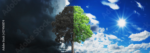 Fotografia concept tree growing and dry with sky and sun background
