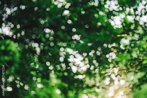 Bokeh of vivid leaves of trees in sunlight. Natural green background. Blurred rich greenery with copy space. Abstract texture of defocused lush foliage in sunny day. Backdrop of scenic nature in blur. - 274175236