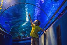 Aquarium And Boy, Visit In Oceanarium, Underwater Tunnel And Kid, Wildlife Underwater Indoor, Nature Aquatic, Fish, Tortoise