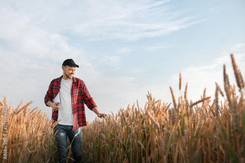 Fototapety, obrazy: Farmer in field on sunny day