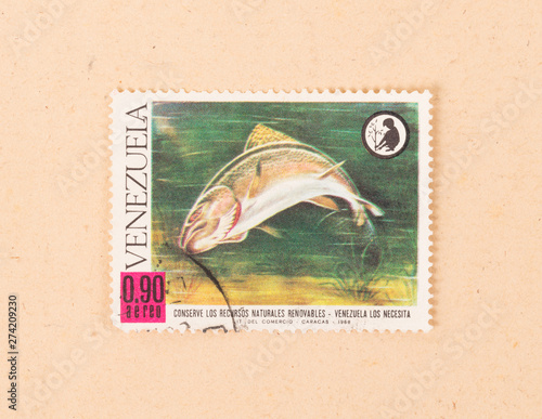 Fotografia  VENEZUELA - CIRCA 1968: A stamp printed in Venezuela shows a large fish, circa 1