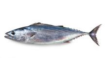 Mediterranean Fish, Atlantic Bonito, Palamita, Sarda Sarda