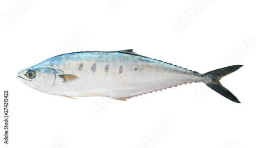 Obraz na plátně Big fresh talang queenfish isolated on the white background