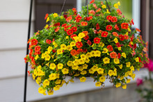 Wide View Of A Hanging Basket ...